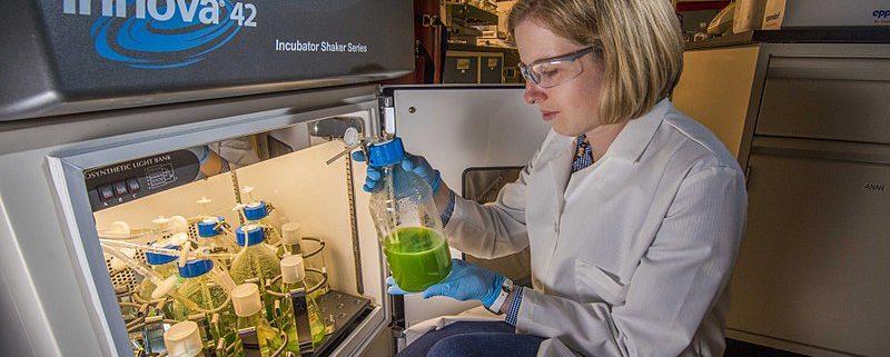 cara menggunakan shaker laboratorium